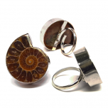 Ammonite Rings
