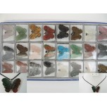 Pendant Pack on Cord - Butterfly Assorted Stones 24 piece pack