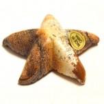 Starfish 1.5 Inch Figurine - Picture Jasper