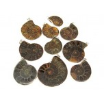 Ammonite Fossil Pendant 10 piece pack