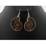 Ammonite Fossil Earring 1 pair
